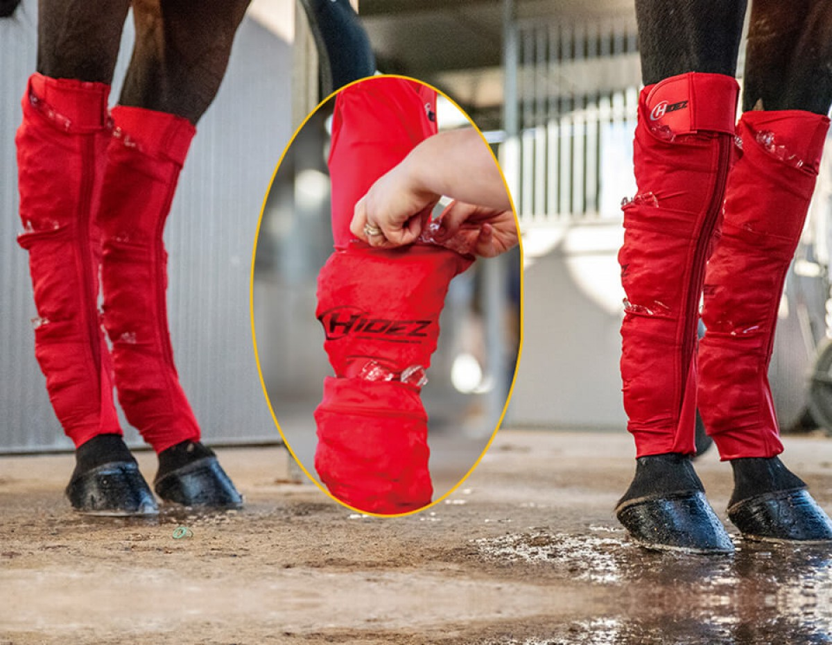 EQUINE SEAMLESS ICE COMPRESSION SOCK RED