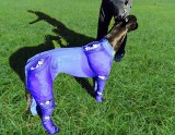 GREYHOUND ICE COMPRESSION SUIT BLUE