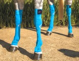 EQUINE COMPRESSION SOCK TURQUOISE