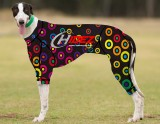 RACING-SUIT-PRINTED-BULLSEYE