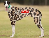 RACING-SUIT-PRINTED-CHEETAH