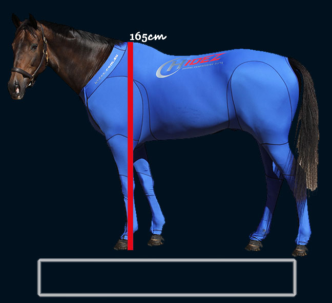 horse size chart